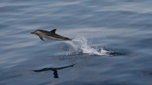 GJEonearth-europe-dolphin