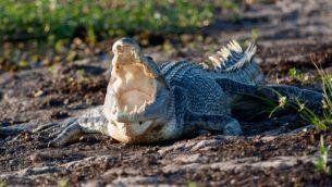 GJEonearth-oceania-Sea-Crocodile-01