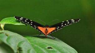 GJEonearth-south-america-Butterfly