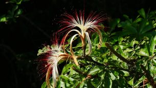 GJEonearth-south-america-Rainforest-Flower