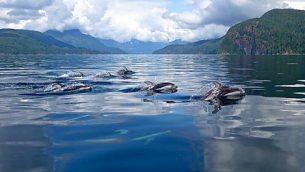 gjeonearth-north-america-Dolphins